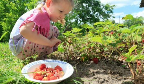 Virginia-Beach-girl-eating-food-and-picking-strawberries