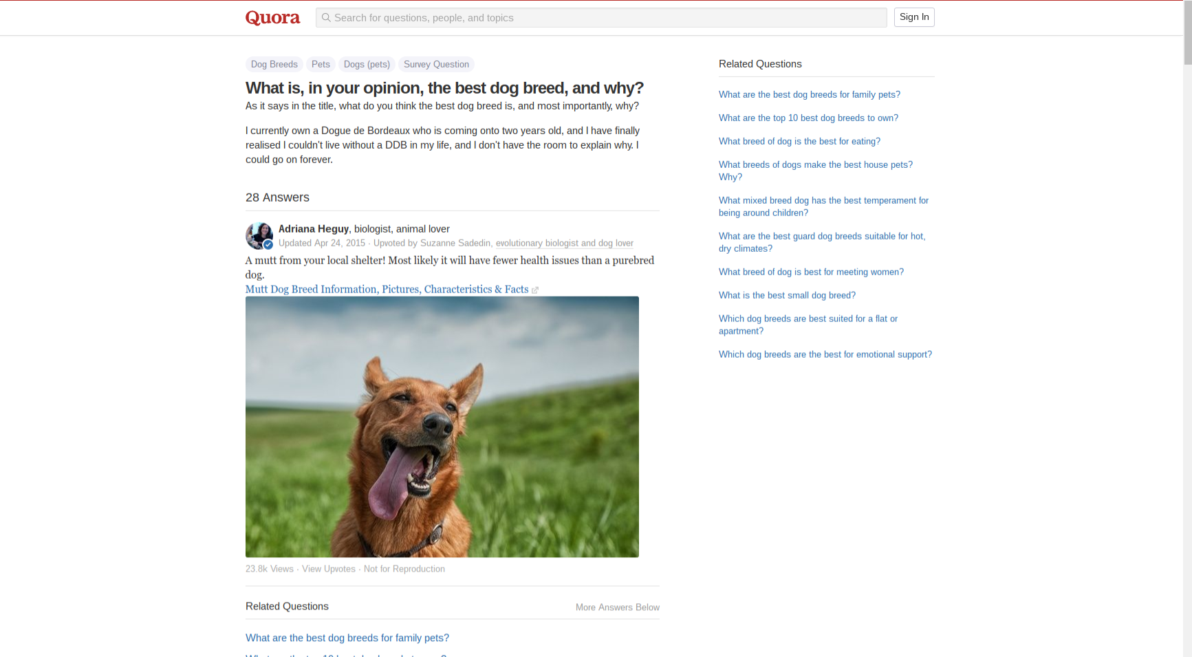 quora-search-on-in-your-opinion-the-best-dog-breed-and-why.png