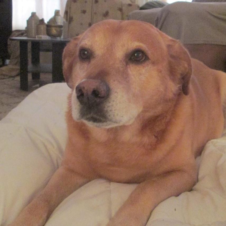 baxter-the-dog