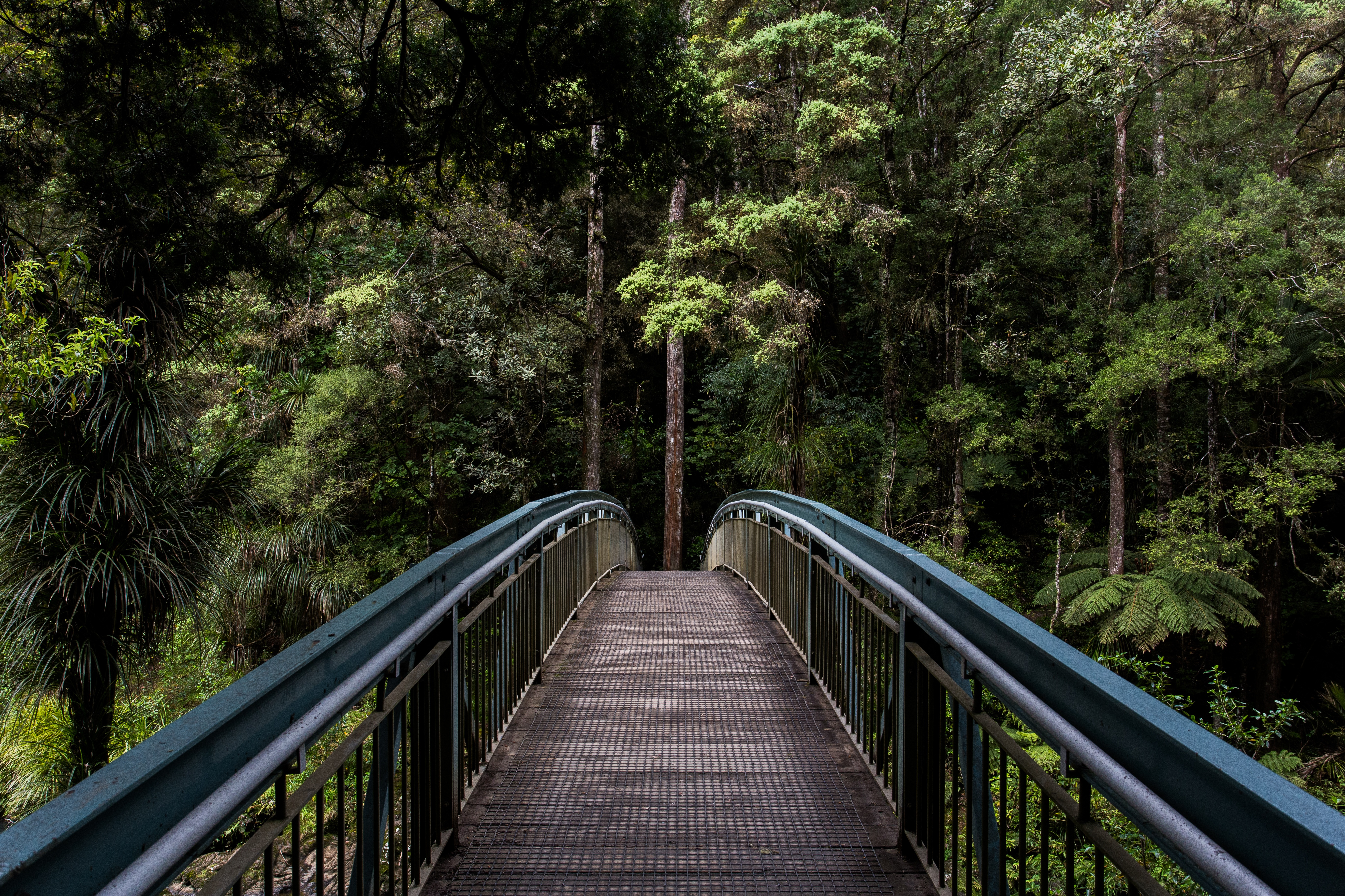 bridge-leading-into-the-forest
