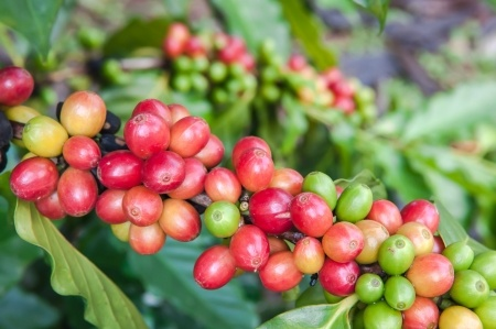 blogging-for-a-coffee-roasting-company-1