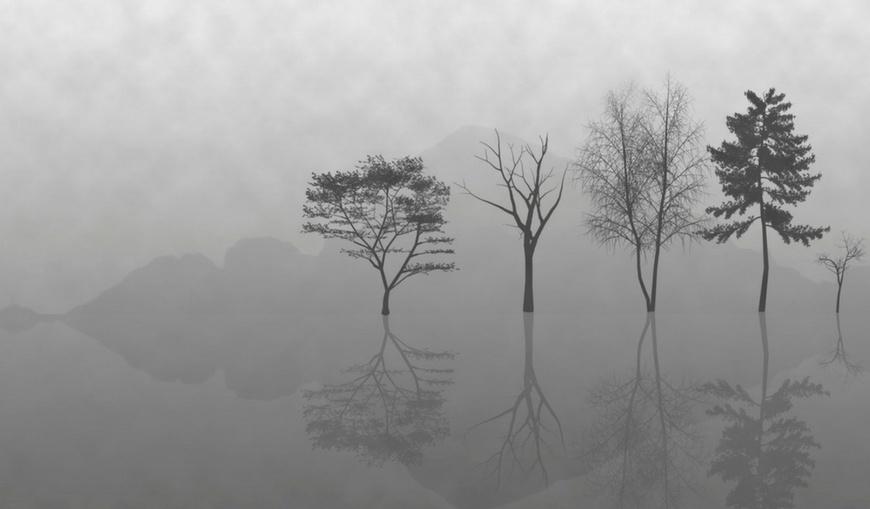 zen-reflections-of-trees
