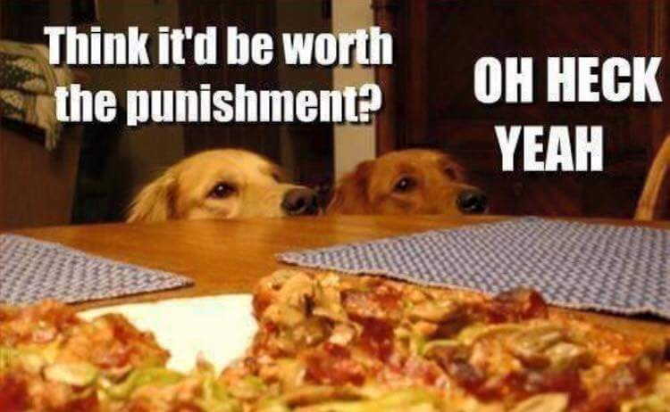 Dogs-looking-at-pizza-think-it'd-be-worth-the-punishment-oh-heck-ya