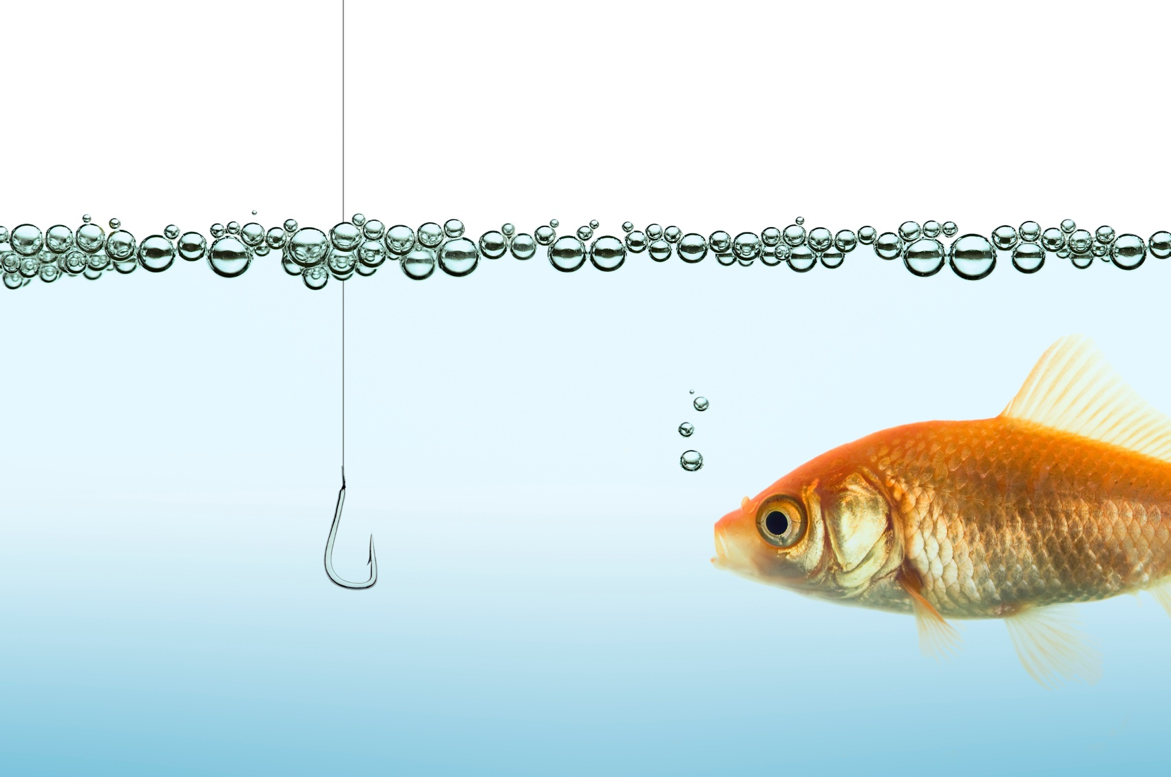 gold-fish-swimming-towards-hook