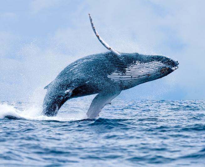 whale-water-ocean