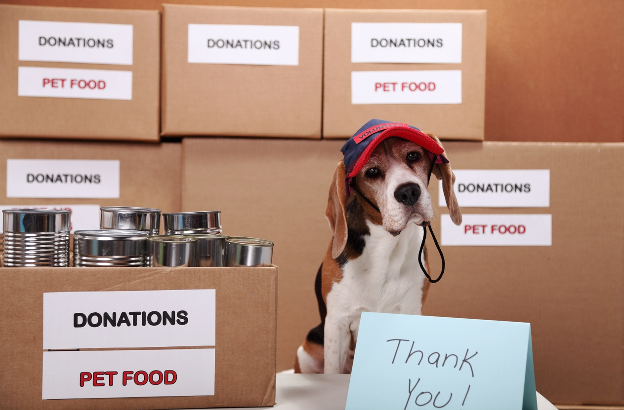 pet-food-donation-dog-volunteer.jpg