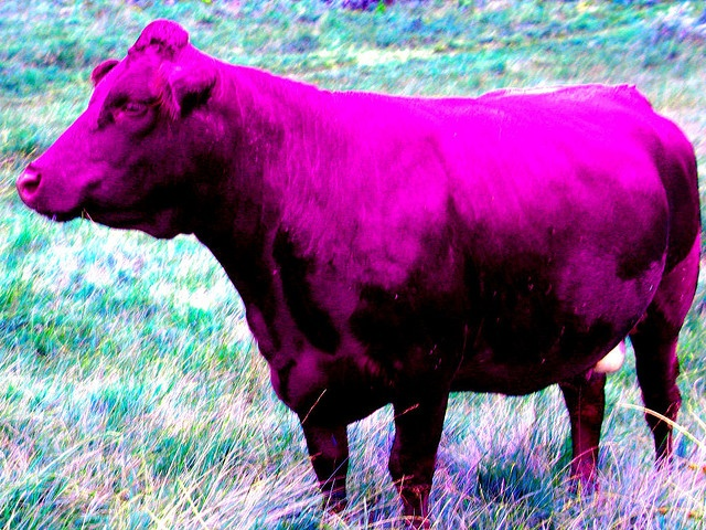 cow-purple-filter