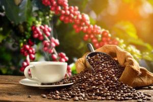 shade-grown coffee cherries, roasted coffee beans, cup of coffee