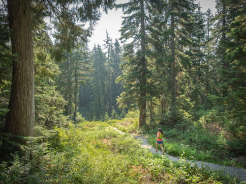 trail running through woods
