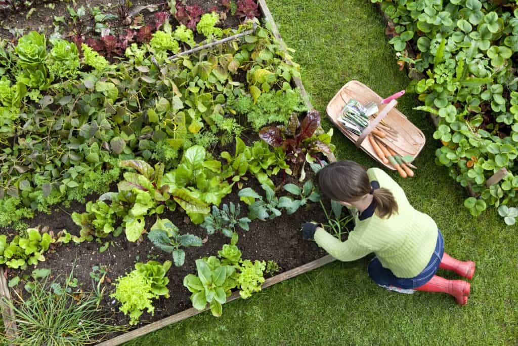 Garden content creation challenges