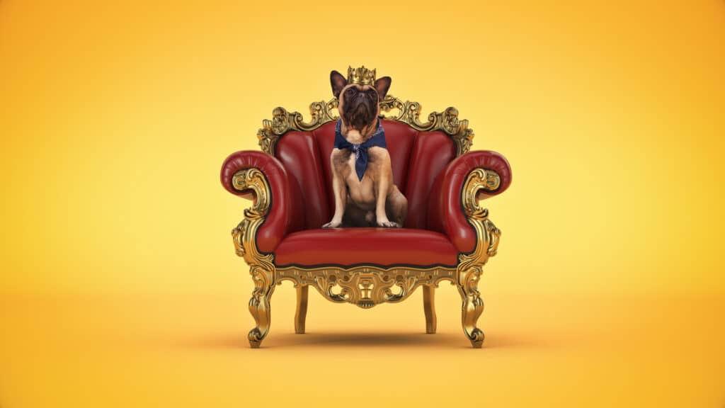 Dog with crown in a chair