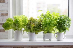 winter garden potted herbs